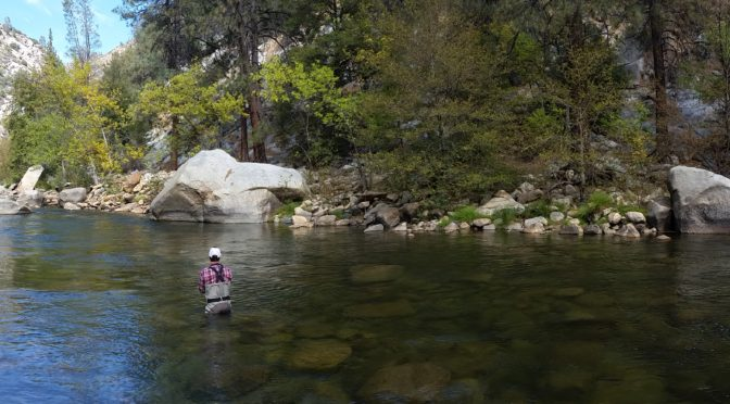 Kern River Fishing Report November 26, 2016