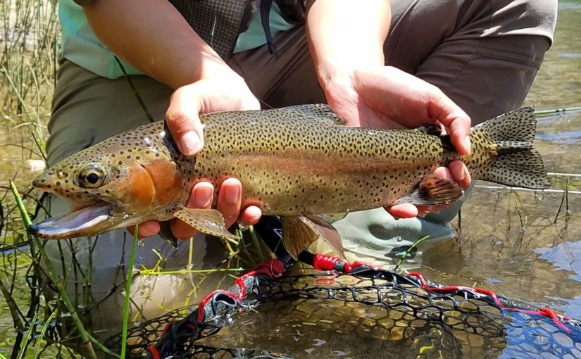 Kern River Fly Fishing Report- June 28, 2018