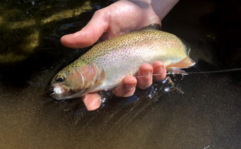 Kern River Fly Fishing Report July 16, 2018