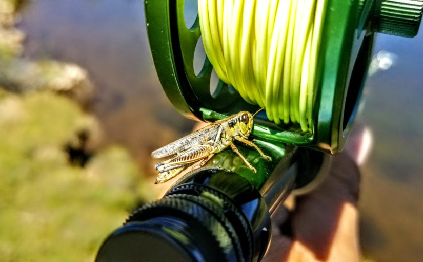 Kern River Fly Fishing Reports – Your source for Southern